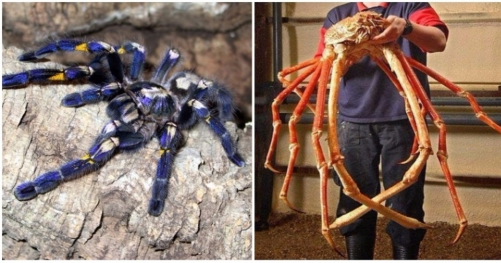 Photo : The 9 biggest and scariest spiders in the world
