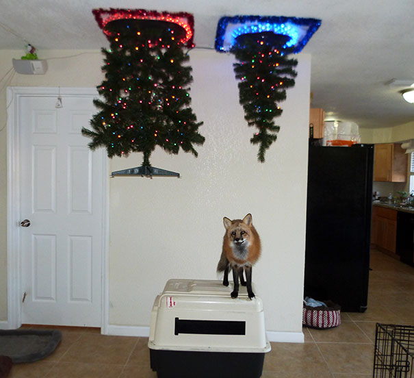 - 20 Genius Ways To Stop Your Pet From Destroying Your Christmas Tree!
